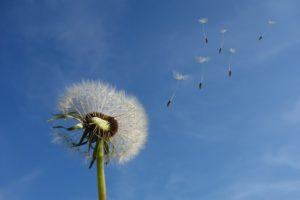 Letting go of controlling behavior
